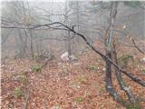 BegunjščicaKamen z narisanim srcem, ki je bil več let na začetku poti, je sedaj nižje v gozdu