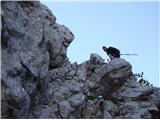 Ojstri vrh 1371mZopet se smeje z vrha, presneto hitra je v steni. To nam je pokazala že zadnjič v stenah Križevnika