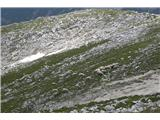 Vernartrop ovac na planoti Tosca