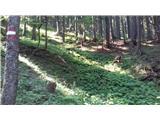 Ladine / Ladinach - macenski_vrh___matschacher_gupf