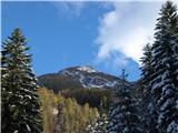 Goli vrh  1787 mnmproti cilju - Goli vrh