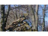 Boč - Donačka goraPo grebenu