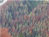 Prelaz Ljubelj (koča)Gozd