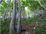 Rodica-Črna prstv lepem gozdu nobene svežine
