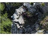 Stegovnikšopek v skali