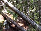 Debela peč, Brda, Lipanski vrh, Mrežcez velikim nahrbtnikom sem se komaj zvlekla skozi podrta drevesa
