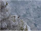 Divja koza - Cima di Riofreddo 2507 m