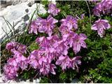 Vogel-Šija-Rodicaprekrasno cvetje na vsakem koraku