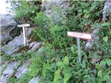 Vogel-Šija-Rodicalepo urejena botanična pot za Liscem