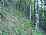 StrelovecKo se kolovoz konča hitro desežem opuščeno markirano pot