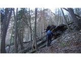 Ojstri vrh 1371mOgromno podrtih dreves, ki ovirajo zelo strm vzpon