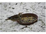 Hranjenje pticJe šel potem raje na talno krmišče - Dlesk