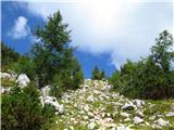 Debela peč, Brda, Lipanski vrh, Mrežcekrajši vzpon med redkimi macesni-škoda, da še niso odeti v zlate barve