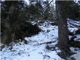 Olševa  Na odprtih predelih je tudi do pol metra snega. Sneg dobro pokriva stezo. Ponekod jo kar težko najdeva