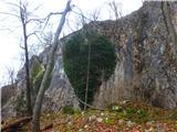 Kamnik ( 861m )zdaj ko so drevesa odvrgla listje se bršljanovo srce še bolje vidi