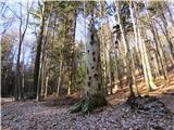 Boč - Donačka gorapot čez gozd