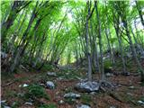 Krasji vrhproti jutranjemu soncu (skozi gozd po sprva široki neoznačeni poti, ki se proti vrhu zoži v stezico in se kar strmo vzpenja)