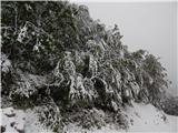 Vrh Ljubeljščice (Triangel)Moker sneg na drevesih