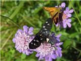 Polhograjska Grmada...in tudi metuljev