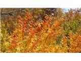 Gonžarjeva pečSvečane podobe jeseni