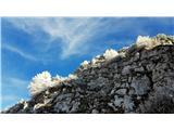 Jerebica /Cima del LagoMegla in veter sta v belo obarvala macesne in ruševje
