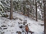 Javorca(Golte)na Planinski ravni skoraj nič snega
