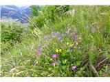 Polhograjska Gora (Sveti Lovrenc)Mešanica čudovitih cvetov