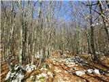 Krasji vrhvzpon skozi gozd