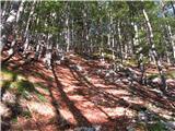Skriti kotički v gorskem rajunekje v gozdu pod lovsko kočo