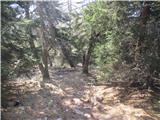 Olševa Na sredini poti