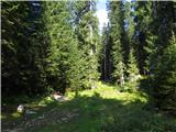 Debela peč, Brda, Lipanski vrh, Mrežcenadaljevanje po markirani poti skozi gozd