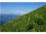 Planinske koče- Pobočje pod M. Golico je polno pisanega cvetja