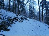 Boč...zahodna pot skozi Staro Drevesnico in prvi ,,načel,, belino snega po padavinah v preteklih dneh...