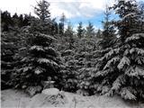 KofceVišje je nekaj malega snega