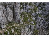 Prečenje Via de la Vita - Vevnica - Strug - PonceTrave, grušč, zemlja, pomanjkanje varoval in velika izpostavljenost so značilnosti te škrbine