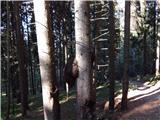 Ilovec - planina_ilovec