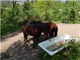 Mengeška koča na Gobavici - rasica_vrh_staneta_kosca