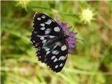 Od Socerba do AnkaranaŠe en metulj
