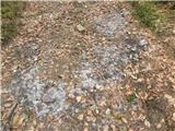 Obnašanje živaliŠopi dlake na gozdni poti, ko se divjad povalja po tleh, da se reši zimske dlake