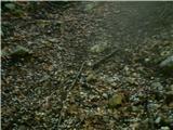 Goli vrh  1787 mnmnekje na 1200 nmv se grmenju pridruži še sodra