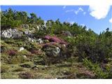 DolomitiV bližini jezera je pomlad v polnem razcvetu