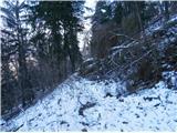 Boč...sestop po Stari rimski cesti nazaj v Studenice ob padlem iglavcu...