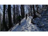 Boč - Donačka goraMed potjo proti vrhu Donačke