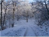 Boč...po gozdni cesti navzdo nekaj sto metrov do vzhodne poti...