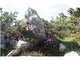 Debela peč, Brda, Lipanski vrh, Mrežce- Gorski aranžma - slečnik