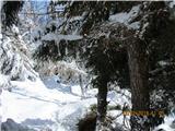 OlševaV zgornjem delu se gozd zredči, zato ,pa je več snega.