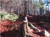 Ogradivzpon po lepi, a kar strmi poti skozi gozd