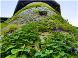 Rožnik - Cankarjev vrh
