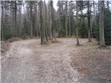 Lesično - veliki_javornik_bohor
