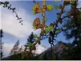 Zelenjak-Palec
